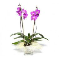 Pink Orchid - flowers and bouquets on salonroz.com