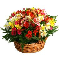 Basket of flowers from 31 multi-colored alstroemerias - flowers and bouquets on salonroz.com