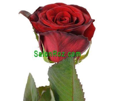 """""""Красные розы поштучно"""" в интернет-магазине цветов salonroz.com"""
