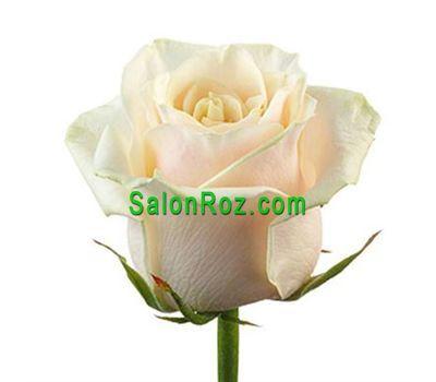 """Выберите сами количество, нажав на фото"" в интернет-магазине цветов salonroz.com"