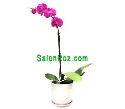 """""""Розовая орхидея"""" в интернет-магазине цветов salonroz.com"""