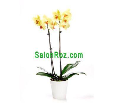 """""""Желтая орхидея"""" в интернет-магазине цветов salonroz.com"""